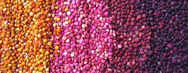 640px-Colored_quinoa_Genebank_INIA_Juliaca