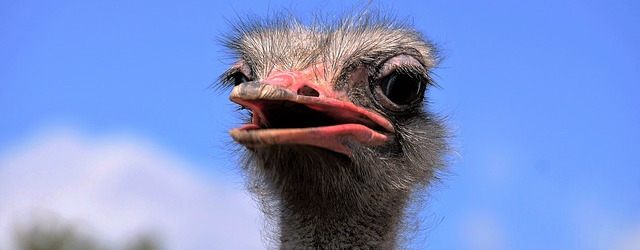 00maxpixel-freegreatpicture-com-grimace-bird-view-head-stupid-the-ostrich-1652481