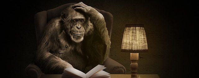 monkey-1757972_640