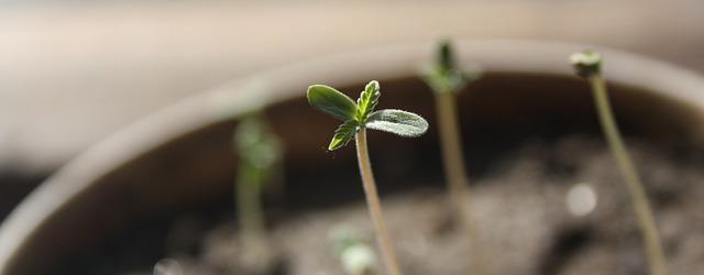 seedling-1062906_640