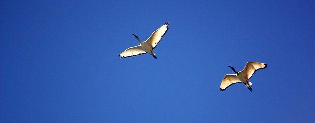 bird-350680_640