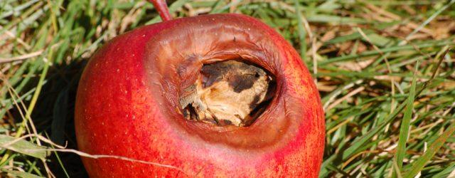 mela bacata